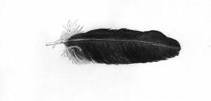 Maran Mantra Using Crow Feather